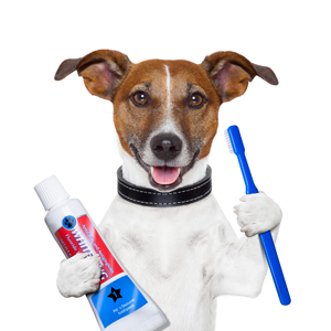 Vellore Woods Veterinary Clinic - Veterinarian in Vaughan, ON - Pet Dental Centre