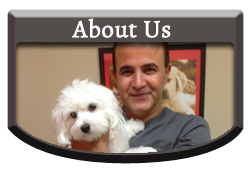 About Us - Vellore Woods Veterinary Clinic - Veterinarian in Vaughan, ON - Full Service Animal Hospital & Pet Dental Centre