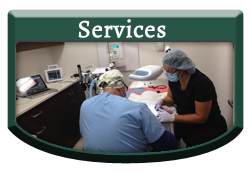 Services - Vellore Woods Veterinary Clinic - Veterinarian in Vaughan, ON - Full Service Animal Hospital & Pet Dental Centre